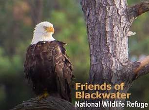 friends of backwater.jpg