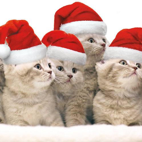 Kittens in Christmas Hats