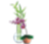 Bamboo & Orchid.png
