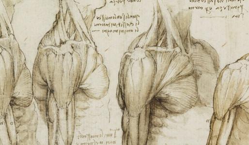 Uso de cadáveres en la enseñanza de anatomía en el pregrado