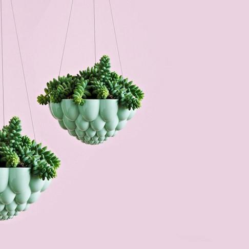 Round Jelly Planter by Angus & Celeste