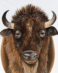 Brogan the Buffalo - Ireland Sturdy & St