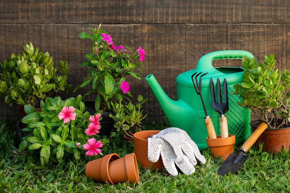 6 dicas para criar seu jardim em casa