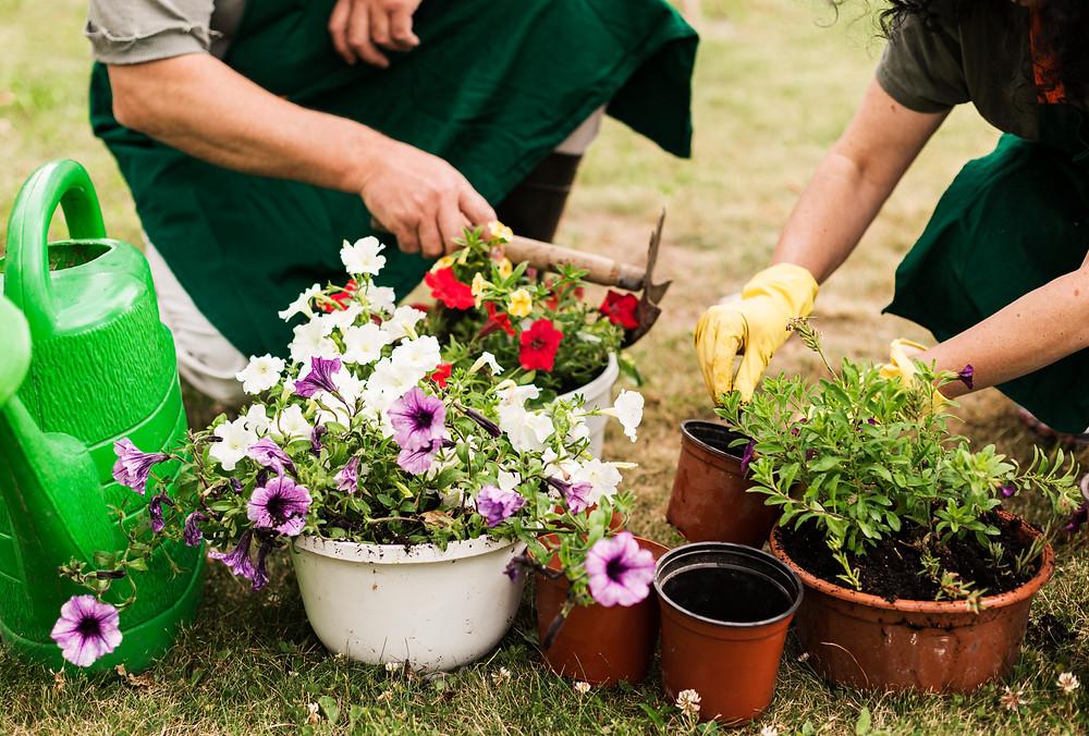 Dicas de jardim para sua área externa