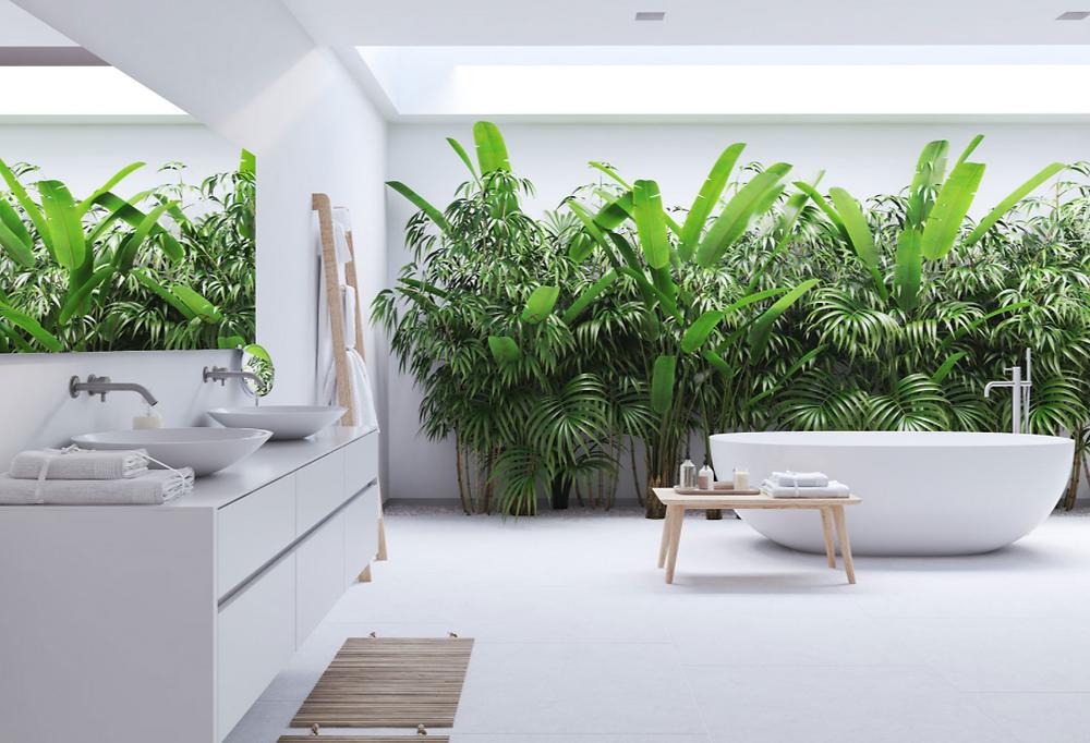 Quais plantas usar em seu banheiro?