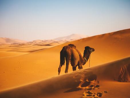 Do Not Fly Like a Unicorn, Strut Like a Camel