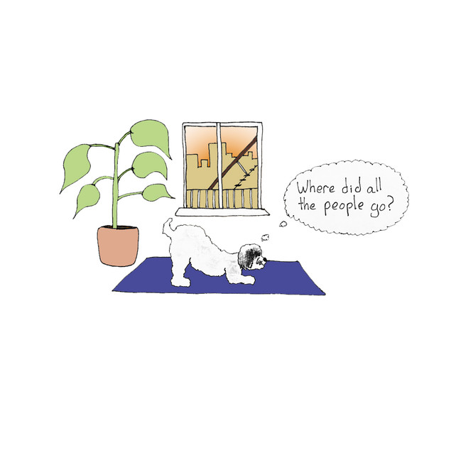 Downward Dog-1.jpg