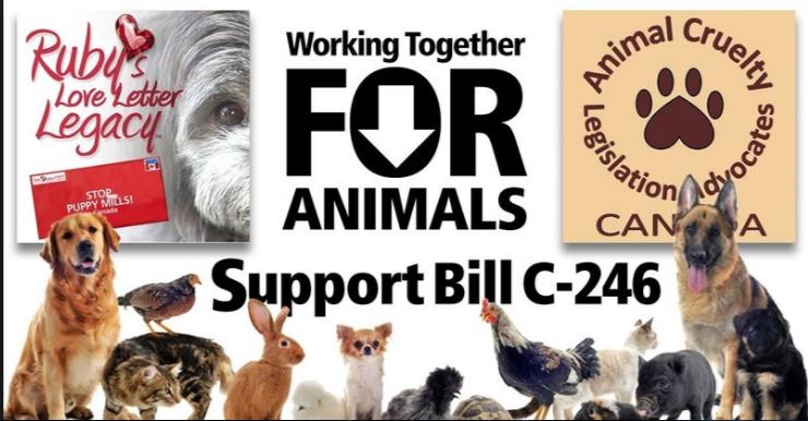 Support Bill C246