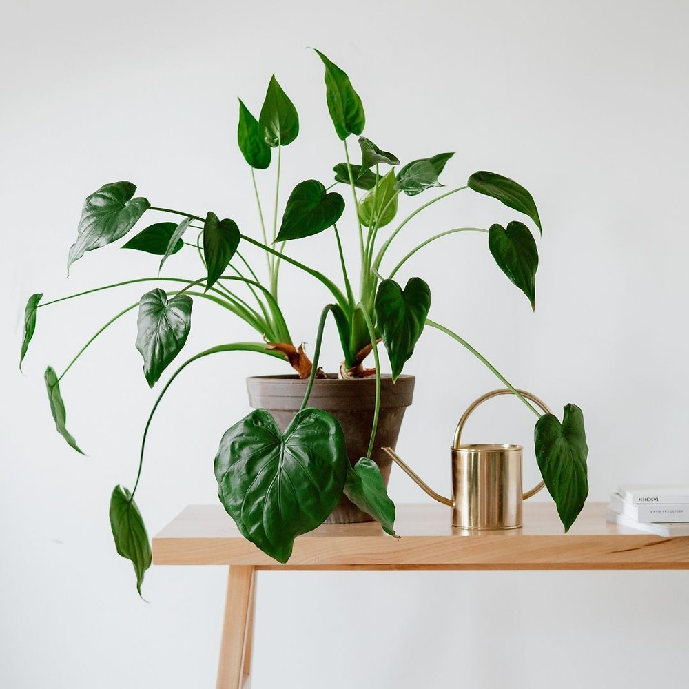 Indoor plant placed on a table