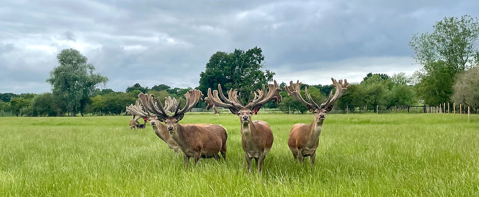Group stag photo - for front page_edited.jpg