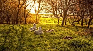 DOGS IN SUN PEXEL.jpg