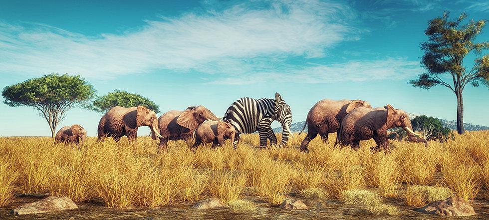 zebra elephant standing out adobe.jpeg