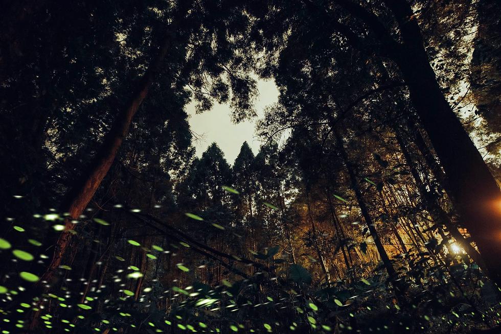 靜謐森林_螢火蟲_2.png