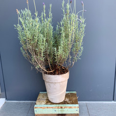 Base for Plant pots