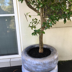Recycled tyre pots