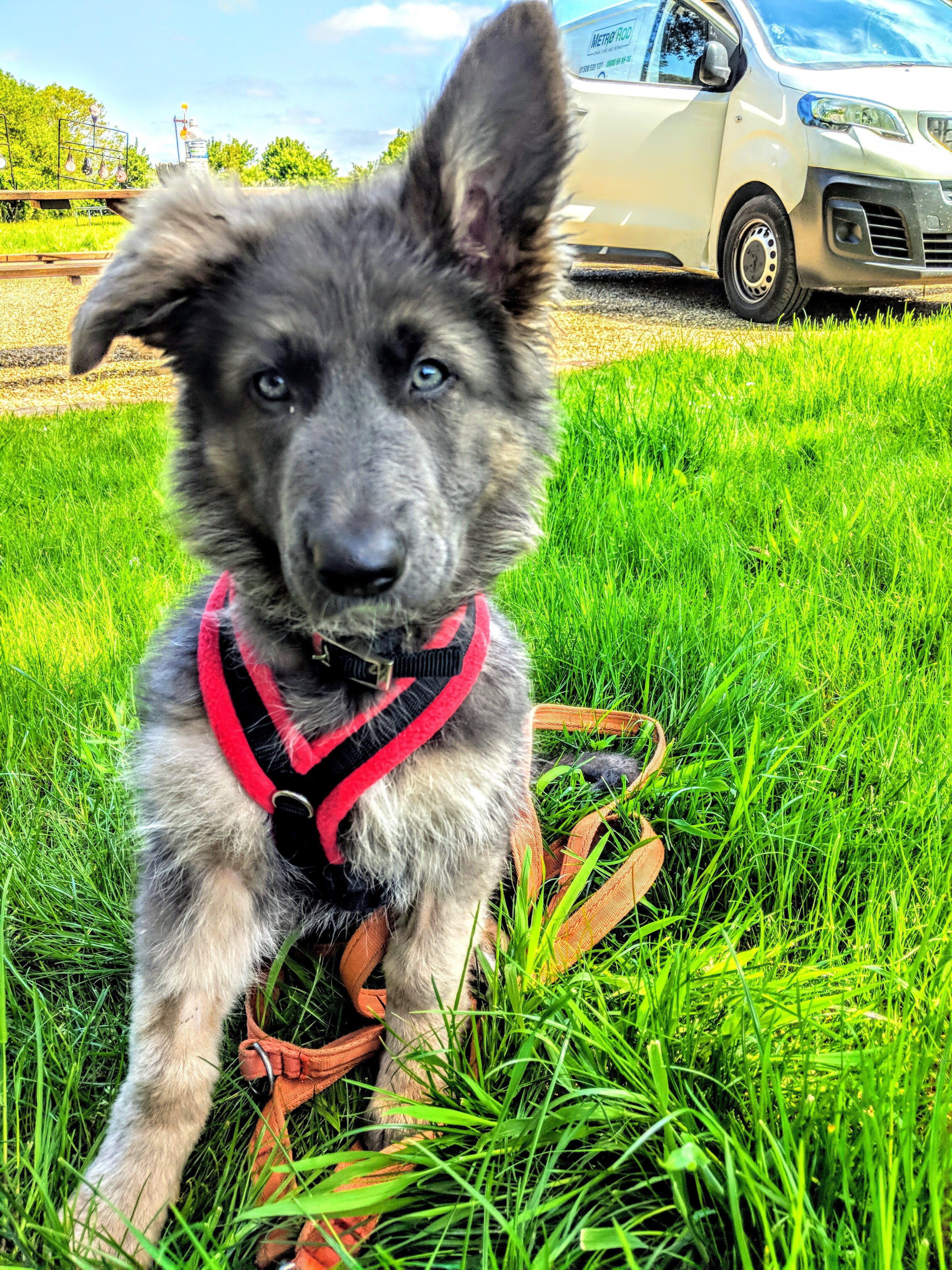 Puppy/ Rescue dog Training Package