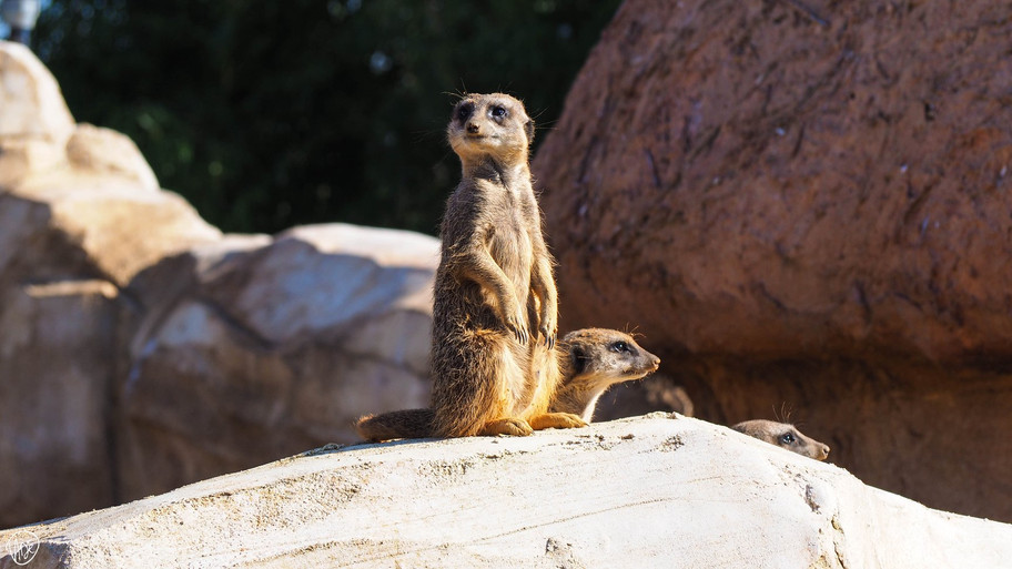 Jus d'icieuse Communication - shooting photo - zoo parc beauval