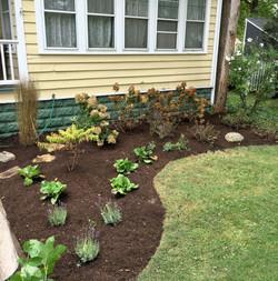 Front Yard Design & Plantings