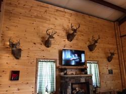 Quality deer mounts KY