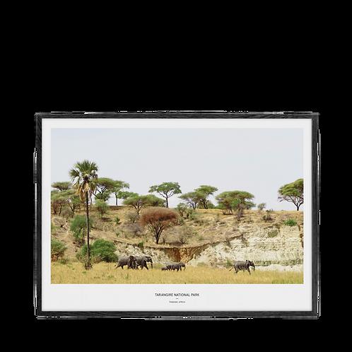 Afrika VII