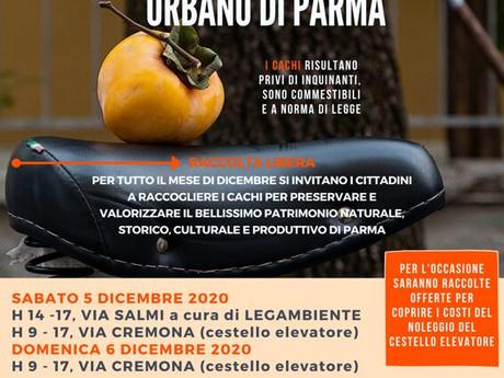 Festa del Raccolto Urbano 2020