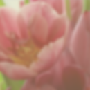 Muted Square Tulips 5:1:20.png