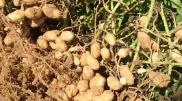 How I went Nuts for Peanuts with my iPhone