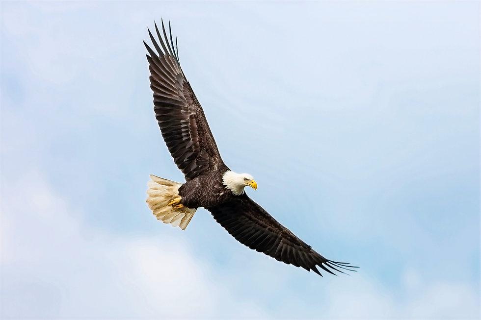 NCCU Eagle
