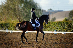 25- Earning the USDF Gold medal at Greenville__More piaffe