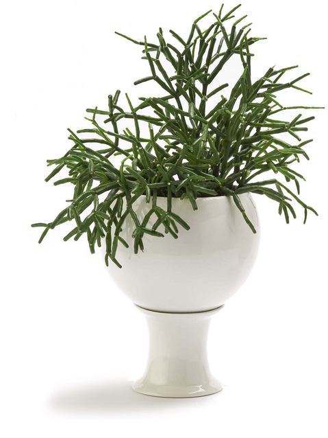 Stand vase