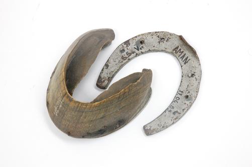 Casco e ferradura de Equino