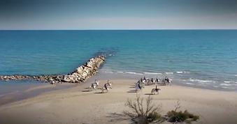 plage-domaine-le-sauvage.png
