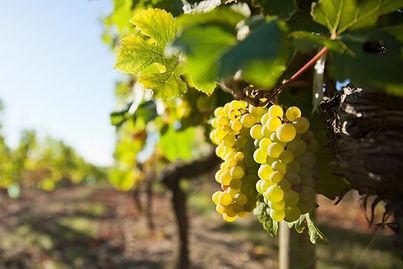 raisin-hotel-val-vignes-escapade-vins-au