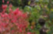 jardin retiré bgnoles séjour rustica cueilette champignons alma mundi normandie manoir du lys