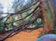 Arboretum bagnoles séjour rustica cueilette champignons alma mundi normandie manoir du lys