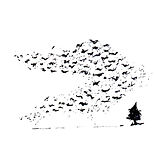 starlings-ag.jpg