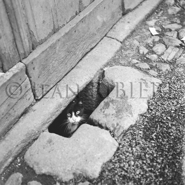 Le chat dans le soupirail