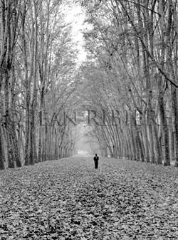 Solitude dans la forêt en automne