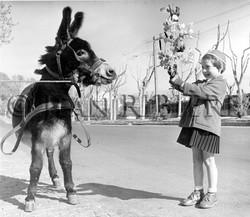 Fillette et son rameau face à l'âne