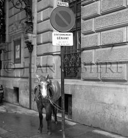 Poney en stationnement gênant !