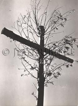 Résurrection : l'arbre de vie