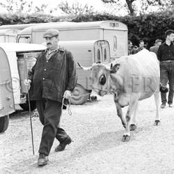 Paysan menant sa vache au marché