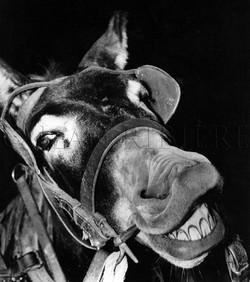 Le Mulet qui rit