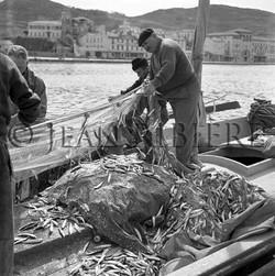 Le retour de la pêche à la sardine