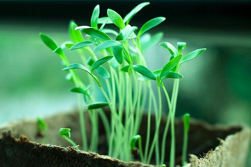 plants-2411458_1280.jpg