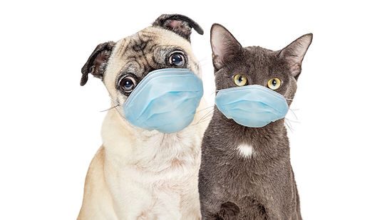 Cat_and_Dog_Wearing_Protective_Surgical_
