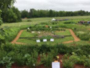 UMASS garden.jpg