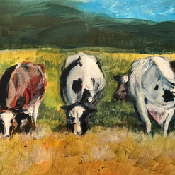3 cows on the field