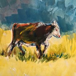 Cow on the field