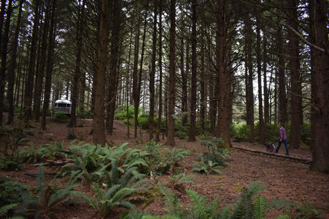 cape-blanco-airstream-in-trees-nick-and-